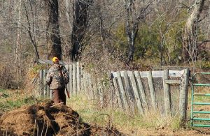 Hunter walking by fence with rifle